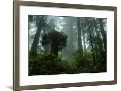 Tall Cool Mist-Vincent James-Framed Photographic Print