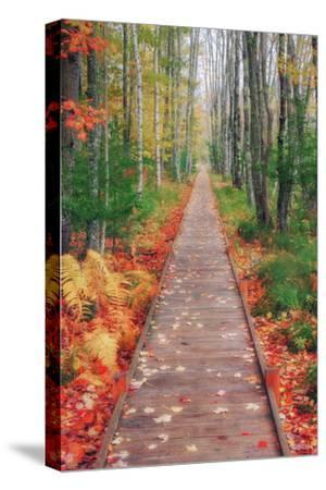 Wild Garden of Acadia Path-Vincent James-Stretched Canvas Print