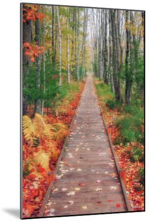 Wild Garden of Acadia Path-Vincent James-Mounted Photographic Print