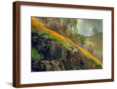 Spring in the Canyon-Vincent James-Framed Photographic Print