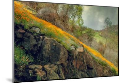 Spring in the Canyon-Vincent James-Mounted Photographic Print