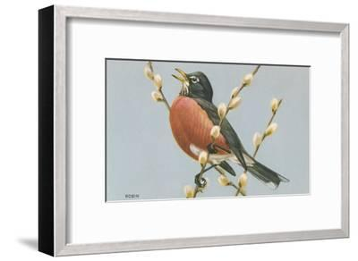 Robin on Pussy Willows--Framed Art Print