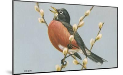 Robin on Pussy Willows--Mounted Art Print