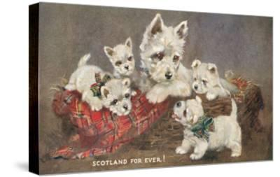 Scotland Forever, Westies--Stretched Canvas Print