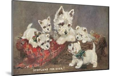 Scotland Forever, Westies--Mounted Art Print