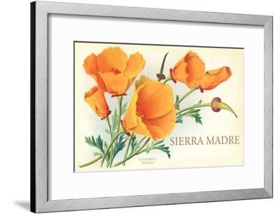 Poppies, Sierra Madre, California--Framed Art Print