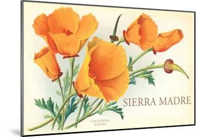 Poppies, Sierra Madre, California--Mounted Art Print
