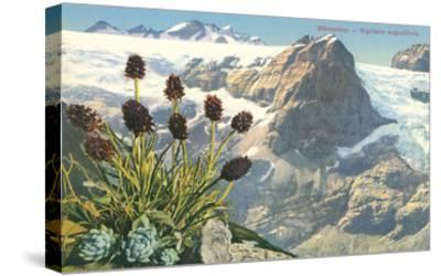 Mountain Flowers, Swiss Alps--Stretched Canvas Print