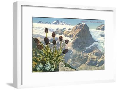 Mountain Flowers, Swiss Alps--Framed Art Print
