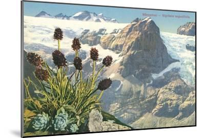 Mountain Flowers, Swiss Alps--Mounted Art Print