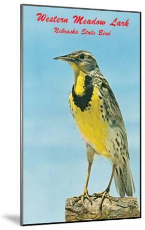 Western Meadowlark--Mounted Art Print