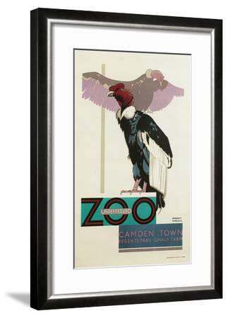 Buzzards, London Zoo--Framed Art Print
