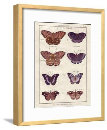 Histoire Naturelle 1-Terrence Wesley-Framed Art Print