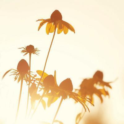 Sundown Flowers-Mandy Lynne-Framed Art Print