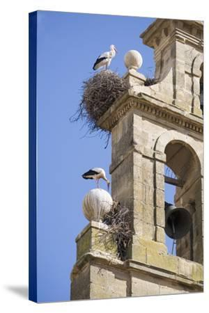 Two European White Storks and their Nests on Convent Bell Tower, Santo Domingo, La Rioja, Spain-Nick Servian-Stretched Canvas Print