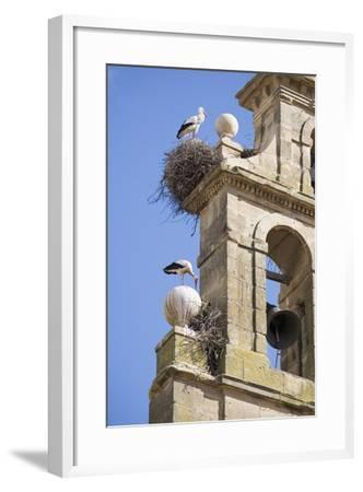 Two European White Storks and their Nests on Convent Bell Tower, Santo Domingo, La Rioja, Spain-Nick Servian-Framed Photographic Print