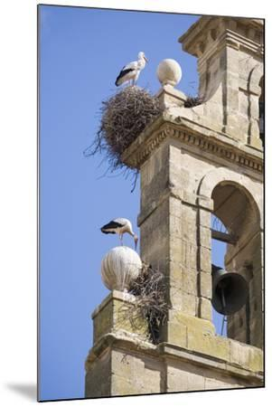 Two European White Storks and their Nests on Convent Bell Tower, Santo Domingo, La Rioja, Spain-Nick Servian-Mounted Photographic Print