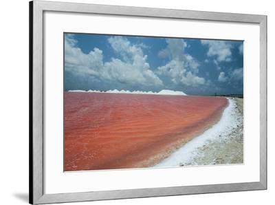 Saline a Salt Mine in Bonaire, ABC Islands, Netherlands Antilles, Caribbean, Central America-Michael Runkel-Framed Photographic Print