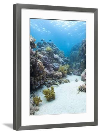 Coral Reef Scene Close to the Ocean Surface, Ras Mohammed Nat'l Pk, Off Sharm El Sheikh, Egypt-Mark Doherty-Framed Photographic Print