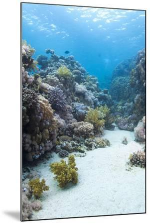 Coral Reef Scene Close to the Ocean Surface, Ras Mohammed Nat'l Pk, Off Sharm El Sheikh, Egypt-Mark Doherty-Mounted Photographic Print