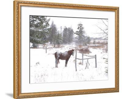 A Horse with a Dusting of Snow on His Back During a Snowstorm-Skip Brown-Framed Photographic Print