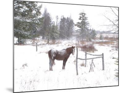 A Horse with a Dusting of Snow on His Back During a Snowstorm-Skip Brown-Mounted Photographic Print