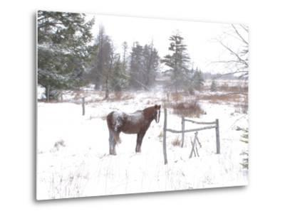 A Horse with a Dusting of Snow on His Back During a Snowstorm-Skip Brown-Metal Print