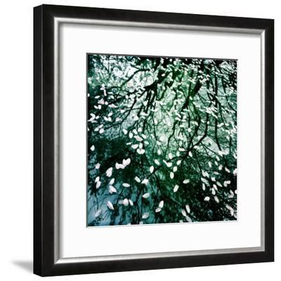 Cherry and Pear Tree Petals and Reflections on the Hood of a Car-Skip Brown-Framed Photographic Print