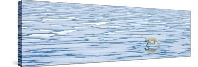 A Lone Polar Bear Walks Along Ice on the Arctic Ocean-Ralph Lee Hopkins-Stretched Canvas Print