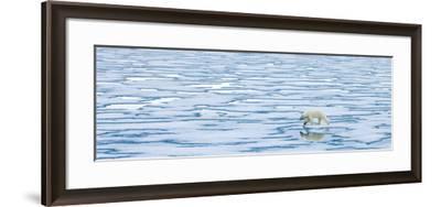 A Lone Polar Bear Walks Along Ice on the Arctic Ocean-Ralph Lee Hopkins-Framed Photographic Print