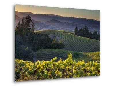 Healdsburg, Sonoma County, California: Vineyard and Winery at Sunset-Ian Shive-Metal Print