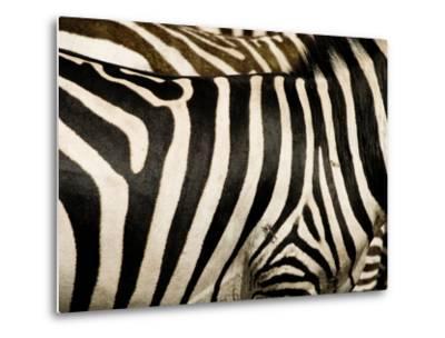 A Pattern of Stripes on a Burchell's Zebra.  Kenya.-Karine Aigner-Metal Print