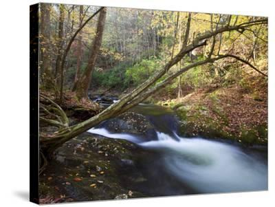 The Little River, Great Smoky Mountains National Park, Tn-Ian Shive-Stretched Canvas Print