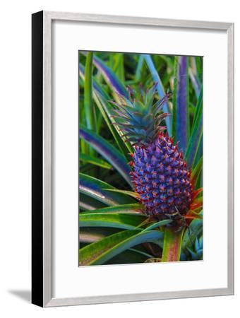 Pineapple, Melanesia, Fiji-Douglas Peebles-Framed Photographic Print