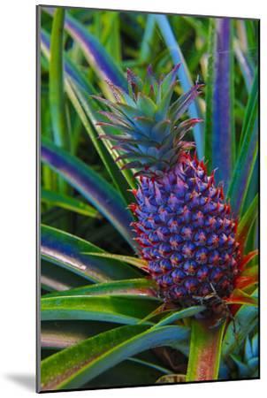 Pineapple, Melanesia, Fiji-Douglas Peebles-Mounted Photographic Print