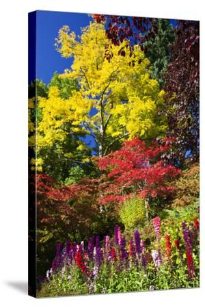 Autumn Color, Butchard Gardens, Victoria, British Columbia, Canada-Terry Eggers-Stretched Canvas Print