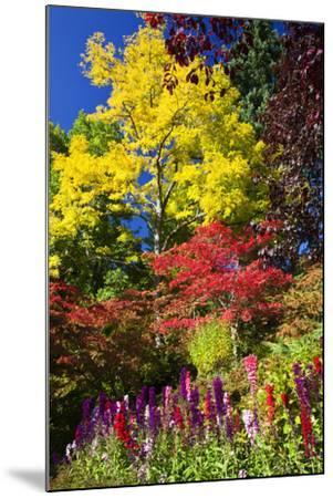 Autumn Color, Butchard Gardens, Victoria, British Columbia, Canada-Terry Eggers-Mounted Photographic Print