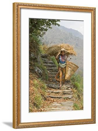Local Woman Follows a Trail Carrying a Basket Called a Doko, Annapurna, Nepal-David Noyes-Framed Photographic Print