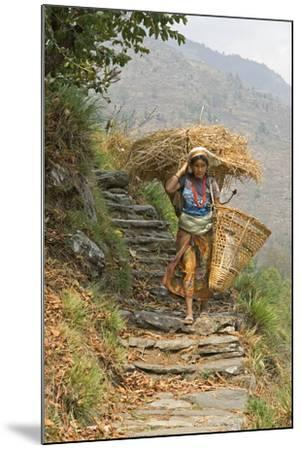 Local Woman Follows a Trail Carrying a Basket Called a Doko, Annapurna, Nepal-David Noyes-Mounted Photographic Print