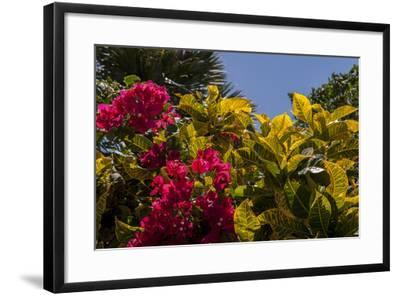 Bougainvillea Flowers, Bavaro, Higuey, Punta Cana, Dominican Republic-Lisa S^ Engelbrecht-Framed Photographic Print