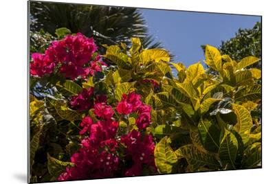 Bougainvillea Flowers, Bavaro, Higuey, Punta Cana, Dominican Republic-Lisa S^ Engelbrecht-Mounted Photographic Print