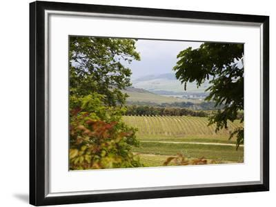 Vineyard and Olive Grove on Rolling Hillside, Tuscany, Italy-Terry Eggers-Framed Photographic Print