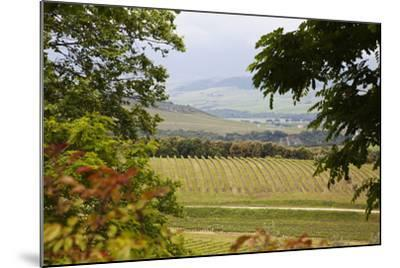 Vineyard and Olive Grove on Rolling Hillside, Tuscany, Italy-Terry Eggers-Mounted Photographic Print