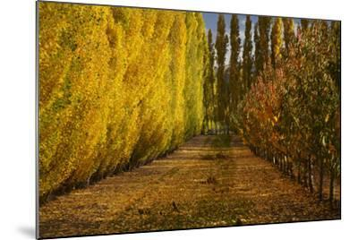 Orchard in Autumn, Ripponvale, Cromwell, Central Otago, South Island, New Zealand-David Wall-Mounted Photographic Print