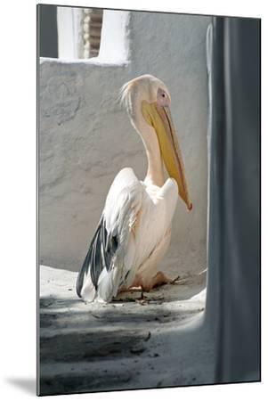 Petros the Pelican, Chora, Mykonos, Greece-David Noyes-Mounted Photographic Print