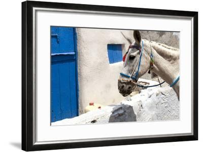 Donkey Waits at Cobbled Stairway, Santorini, Greece-David Noyes-Framed Photographic Print