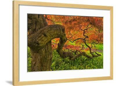 Close-Up Japanese Maple Tree, Winterthur Gardens, Delaware, USA--Framed Photographic Print