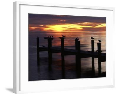 View of Birds on Pier at Sunset, Fort Myers, Florida, USA-Adam Jones-Framed Photographic Print