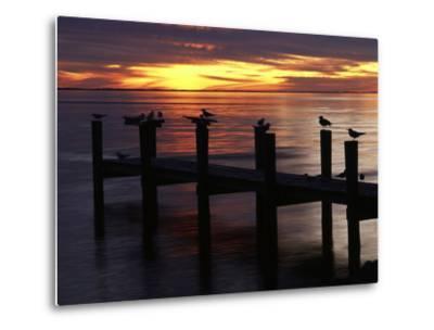 View of Birds on Pier at Sunset, Fort Myers, Florida, USA-Adam Jones-Metal Print