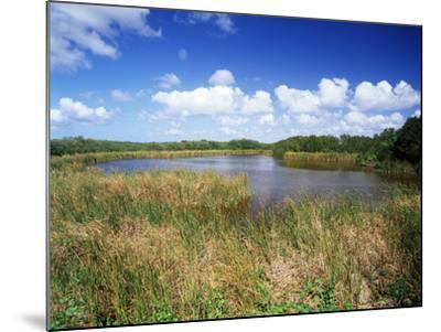 View of Eco Pond, Everglades National Park, Florida, USA-Adam Jones-Mounted Photographic Print